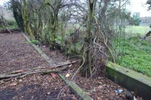 Southern wall of Danson Pool in copse of trees, 2014