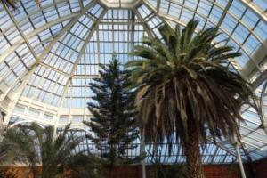 Avery Hill Winter Gardens in February 2014