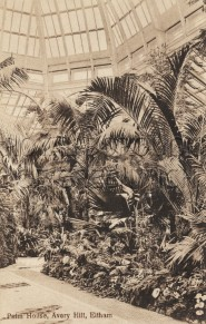 Avery Hill Palm House